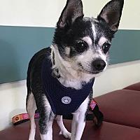 Adopt A Pet :: Chico - Los Angeles, CA