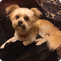 Adopt A Pet :: DONOVAN - Los Angeles, CA