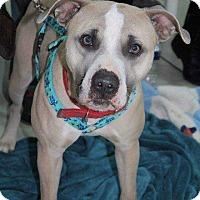 Adopt A Pet :: Pacino - West Branch, MI