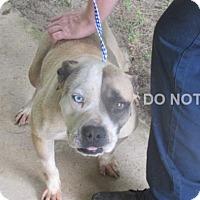 Adopt A Pet :: Drake - Rocky Mount, NC