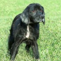 Adopt A Pet :: Jeffrey *Foster* - Glen Allen, VA