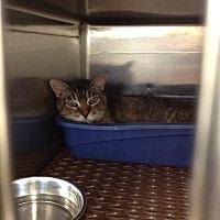 Adopt A Pet :: Pine - Seguin, TX