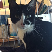 Adopt A Pet :: Classy - Breinigsville, PA
