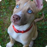 Adopt A Pet :: Simon - Woodstock, GA
