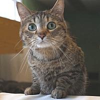 Adopt A Pet :: Kiwi - Chisholm, MN