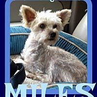 Adopt A Pet :: MILES - Sebec, ME