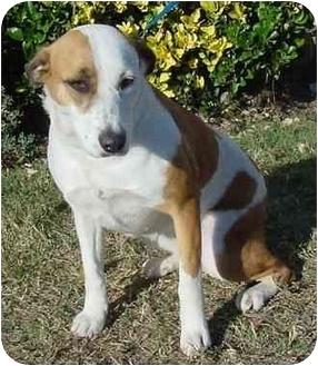 Pointer Mix Dog for adoption in Brenham, Texas - Molly
