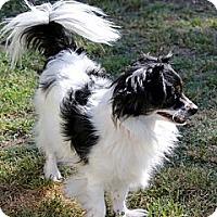 Adopt A Pet :: Holly - Lodi, CA