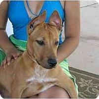 Adopt A Pet :: Cleopatra - Scottsdale, AZ