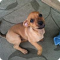 Adopt A Pet :: Dos - Phoenix, AZ