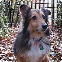 Adopt A Pet :: Caitlin - Charlottesville, VA