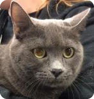 Domestic Shorthair Cat for adoption in Columbus, Georgia - Sadie 377B