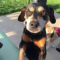 Adopt A Pet :: Winnie - Columbus, OH