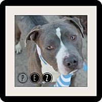 Adopt A Pet :: Pez-Special Needs Foster ! - Des Moines, IA
