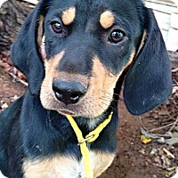 Adopt A Pet :: Lucy Ricardo - Cherry Hill, NJ