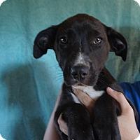 Adopt A Pet :: Amazon - Oviedo, FL