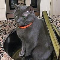 Adopt A Pet :: Skyler - Atlanta, GA