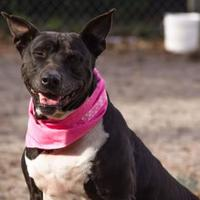 Adopt A Pet :: Gwen - Gainesville, FL