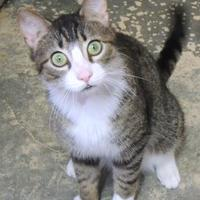 Adopt A Pet :: Marvel - Westville, IN