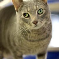 Adopt A Pet :: Buscemi - Greenville, NC