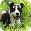 Photo 3 - American Pit Bull Terrier/Pit Bull Terrier Mix Dog for adoption in Nashville, Tennessee - Alex- Adopted
