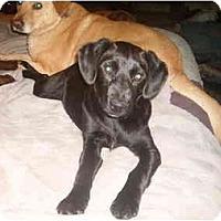 Adopt A Pet :: Zoe - North Jackson, OH