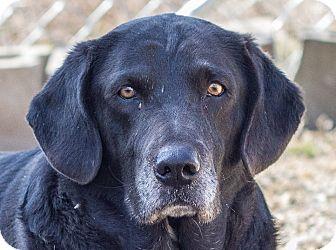 Labrador Retriever Mix Dog for adoption in Hot Springs, Arkansas - Emmetta