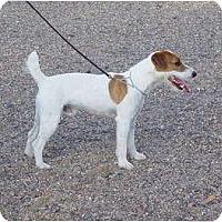 Adopt A Pet :: TEDDY - Scottsdale, AZ