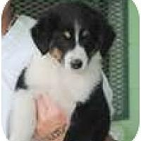 Adopt A Pet :: Candy - New Boston, NH