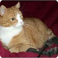 Adopt A Pet :: Sir Morgan - Spencer, NY