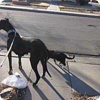 Adopt A Pet :: Anastasia - Albuquerque, NM