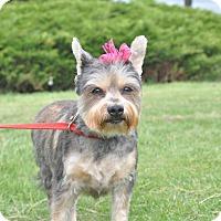 Adopt A Pet :: Camille - Tumwater, WA