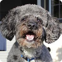 Adopt A Pet :: Maxwell - La Costa, CA