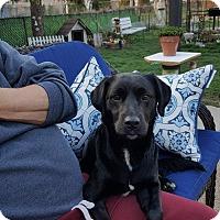 Adopt A Pet :: Jake - Caledon, ON