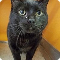Adopt A Pet :: Amy - Elyria, OH