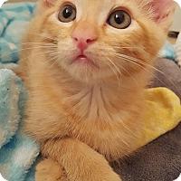 Adopt A Pet :: Copper - Burbank, CA