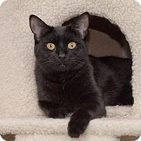 Adopt A Pet :: Sumatra - Wilmington, DE
