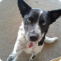 Adopt A Pet :: Babe - Maple Grove, MN