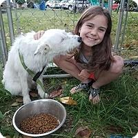Adopt A Pet :: Faith *Great w/ kids,dogs* - Goldens Bridge, NY