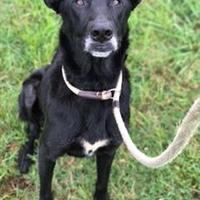 Adopt A Pet :: Osker - Memphis, TN