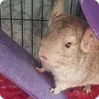 Adopt A Pet :: Qbert - Patchogue, NY