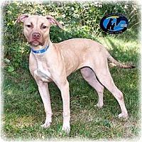 Adopt A Pet :: Laney - Howell, MI