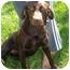 Photo 2 - Labrador Retriever Mix Dog for adoption in Overland Park, Kansas - Chloe