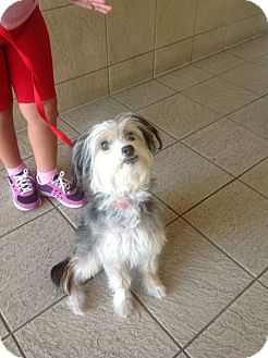 Terrier (Unknown Type, Small) Mix Dog for adoption in San Dimas, California - Mackensie