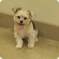 Adopt A Pet :: BUDDY - Wickenburg, AZ
