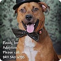 Adopt A Pet :: GUNNAR - Okatie, SC