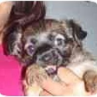Adopt A Pet :: Buzz - Arlington, TX