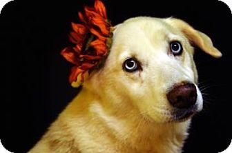 Husky Mix Dog for adoption in Fort Smith, Arkansas - Tundra