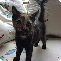 Adopt A Pet :: Tosha - Acme, PA