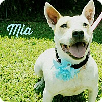 Adopt A Pet :: Mia - Lake Charles, LA